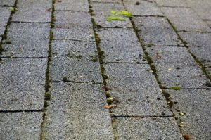 Remove moss from asphalt shingles-image 4132