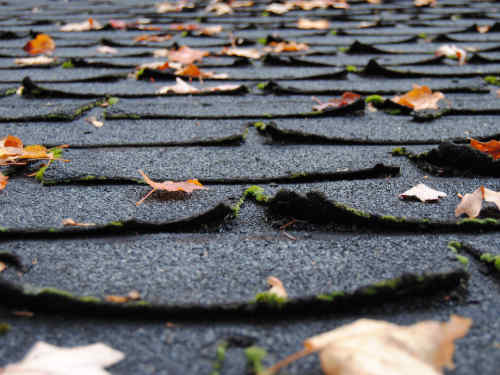 Black asphalt shingles on a roof, curling up at the edges.